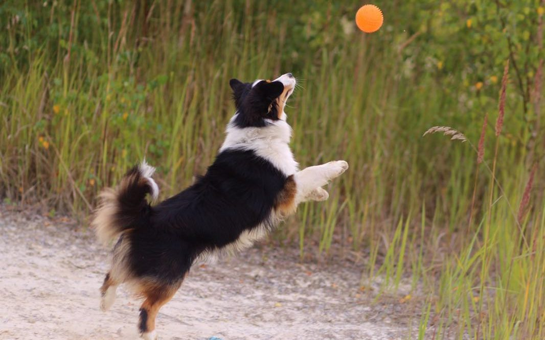 Ausbildung Hund