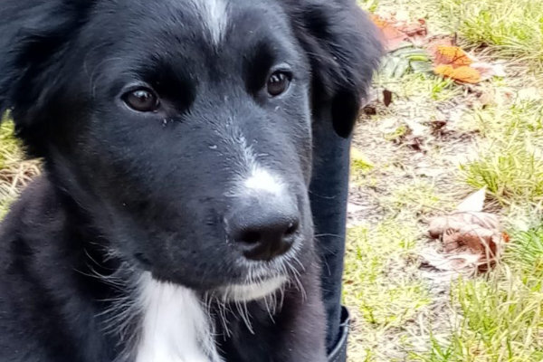 Ergotherapie DianaFrank Hundeschule