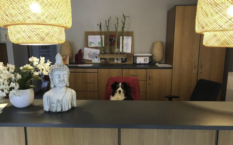 Tiergestützte Therapie Hund